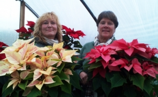 Kerry Demetroules and Deborah Sweeton of the General's Garden Center & Plant Market display two of the contenders for the annual poinsettia judging that takes place at the Open House.