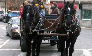 Visitors took advantage throughout the day for the free horse and buggy rides traveling through the Village. Sean Giery and his team of Percherons, Mabel and The Colonel, were back with their mascot Butch who enjoys riding shotgun.