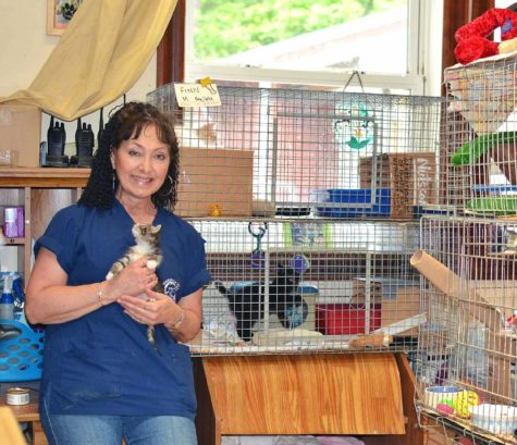 """Provided photo Suzyn Barron, president of the Warwick Valley Humane Society, invites everyone to the """"Kitten Shower"""" on Sunday, June 26."""
